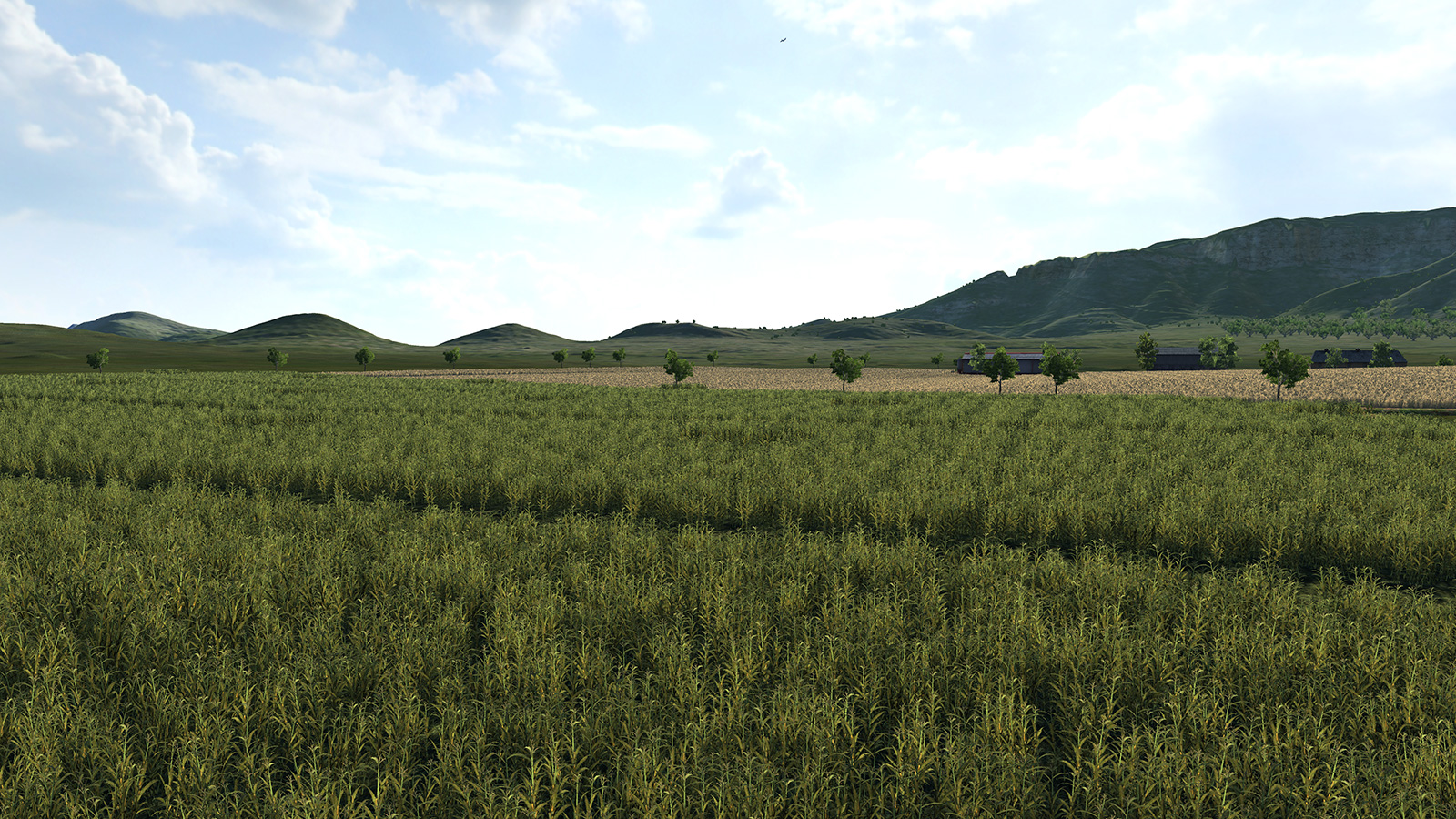cornfield2.jpg