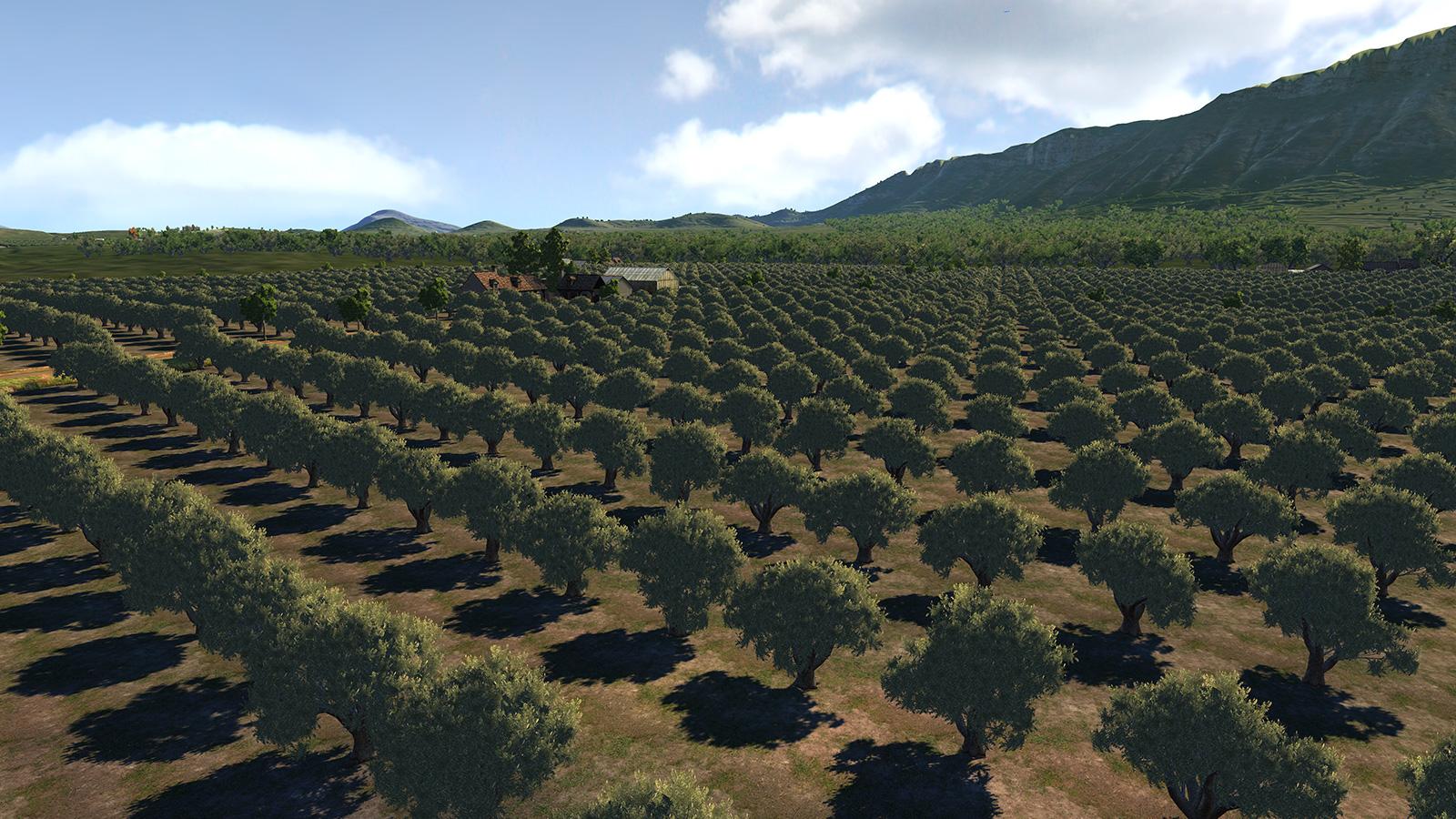 olive_farm3.jpg
