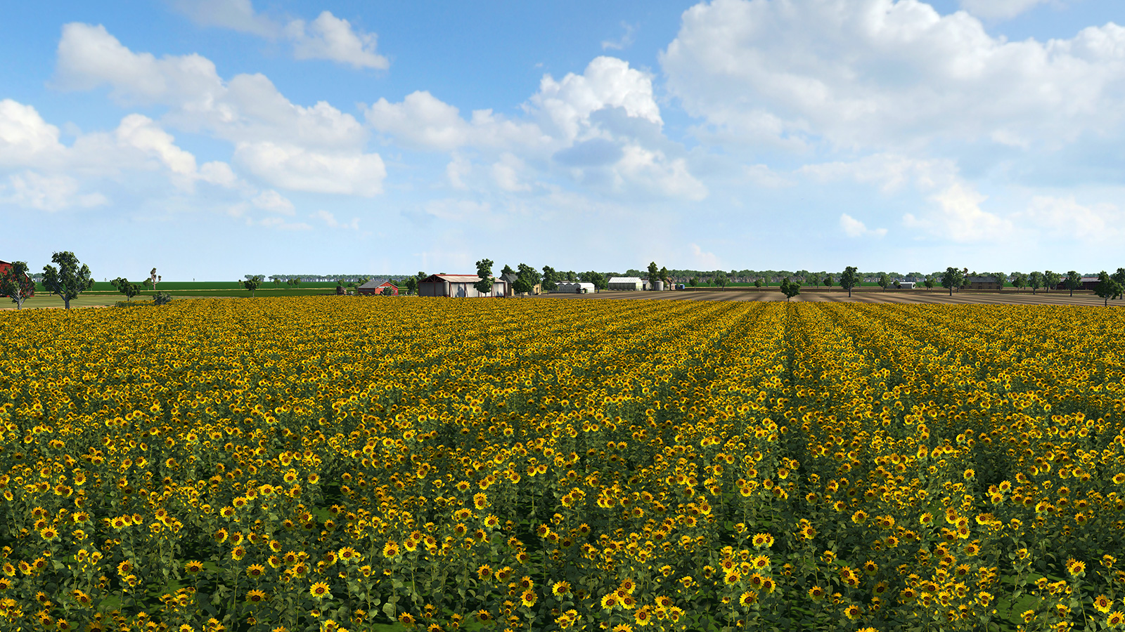 SunflowerField2.jpg