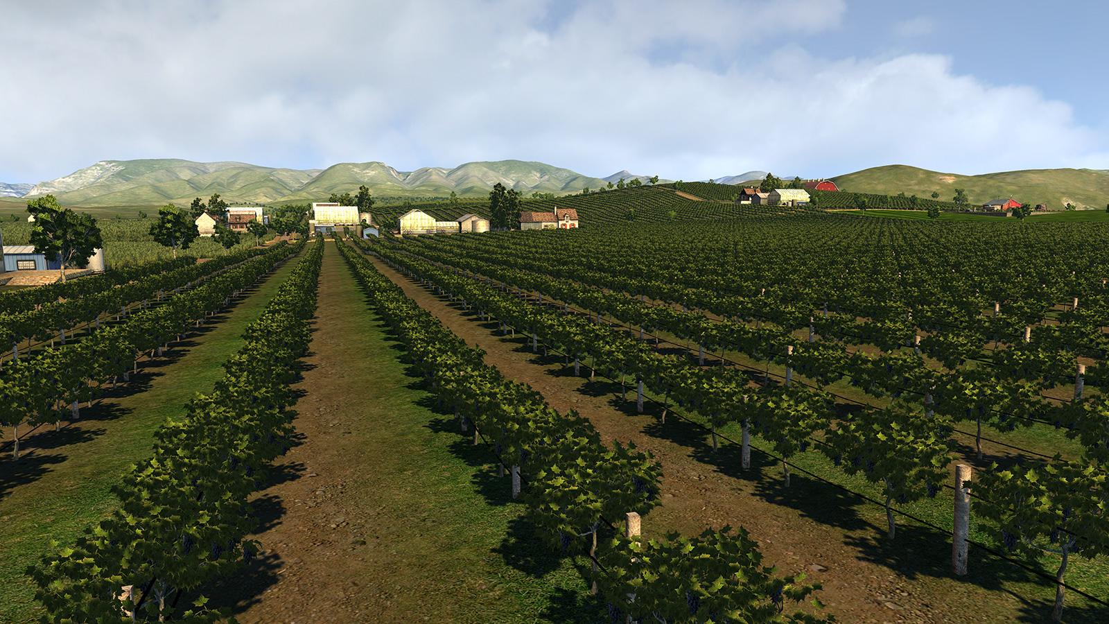 vine_farm2.jpg