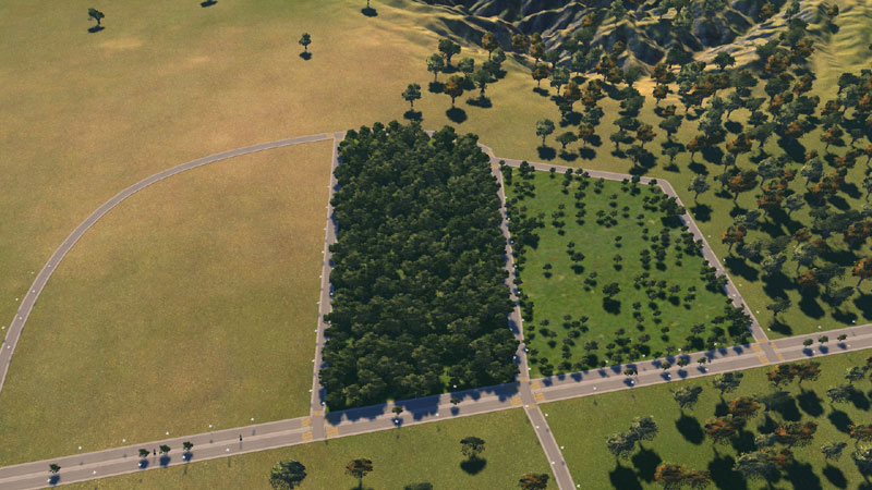 woodedforest02.jpg